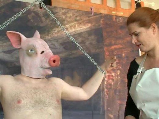 Schweine Testerin